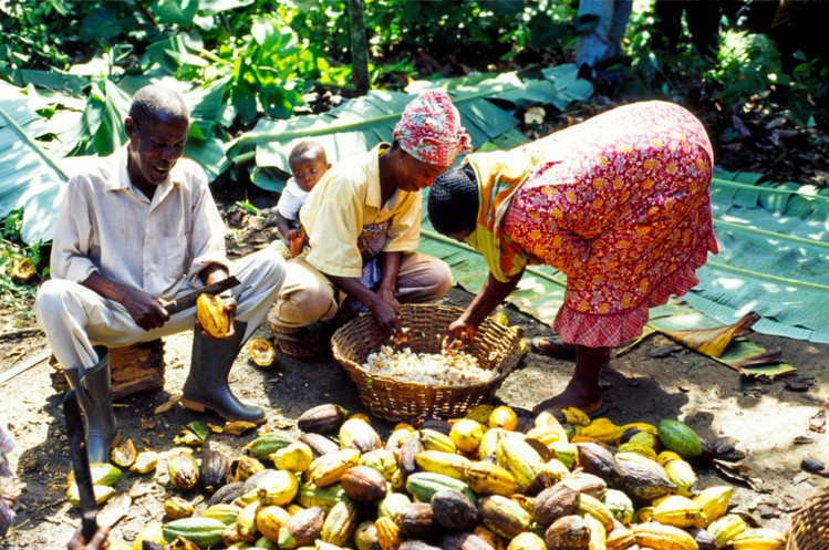 low incomes of cocoa farmers, ghanatalksbusiness.com