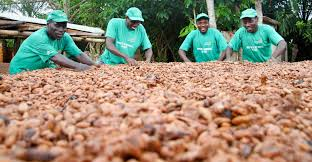 Unintended consequences of Ghana growing more cashew, ghanatalksbusiness.com