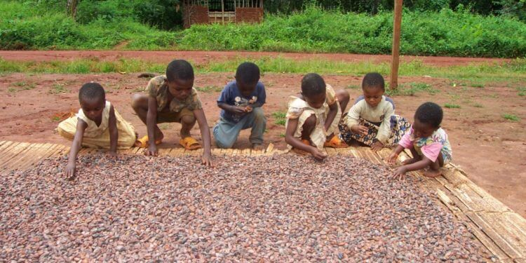 When cocoa child labour is not child labour, ghanatlalksbusiness.com